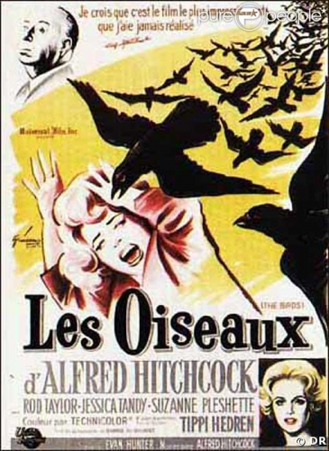 125532-affiche-du-film-les-oiseaux-d-alfred-637x0-1.jpg