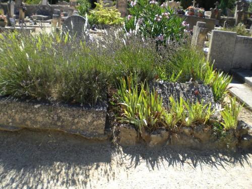 la tombe de Camus pres de celle de son épouse au cimetière de Lourmarin - juillet 2008.JPG